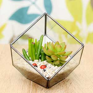 normal_succulent-glass-cube-terrarium-kit.jpg