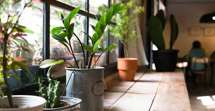 Cute Homemade Indoor Garden Ideas
