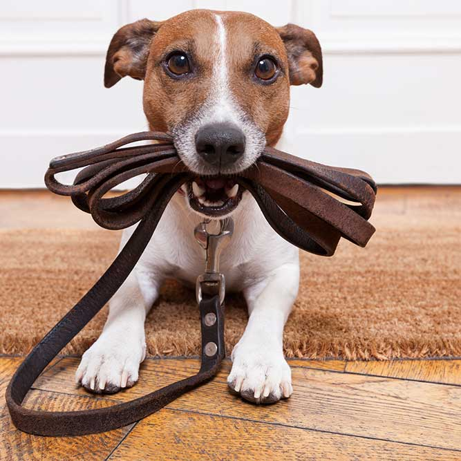 dog with dog lead