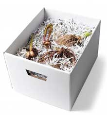 Bulbs in archive box with shredded paper