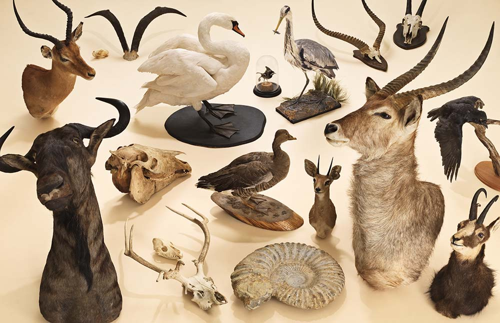 This taxidermy collection featured in the Safestore project 'Stuff is Great'. © Safestore